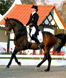 Dressage photography